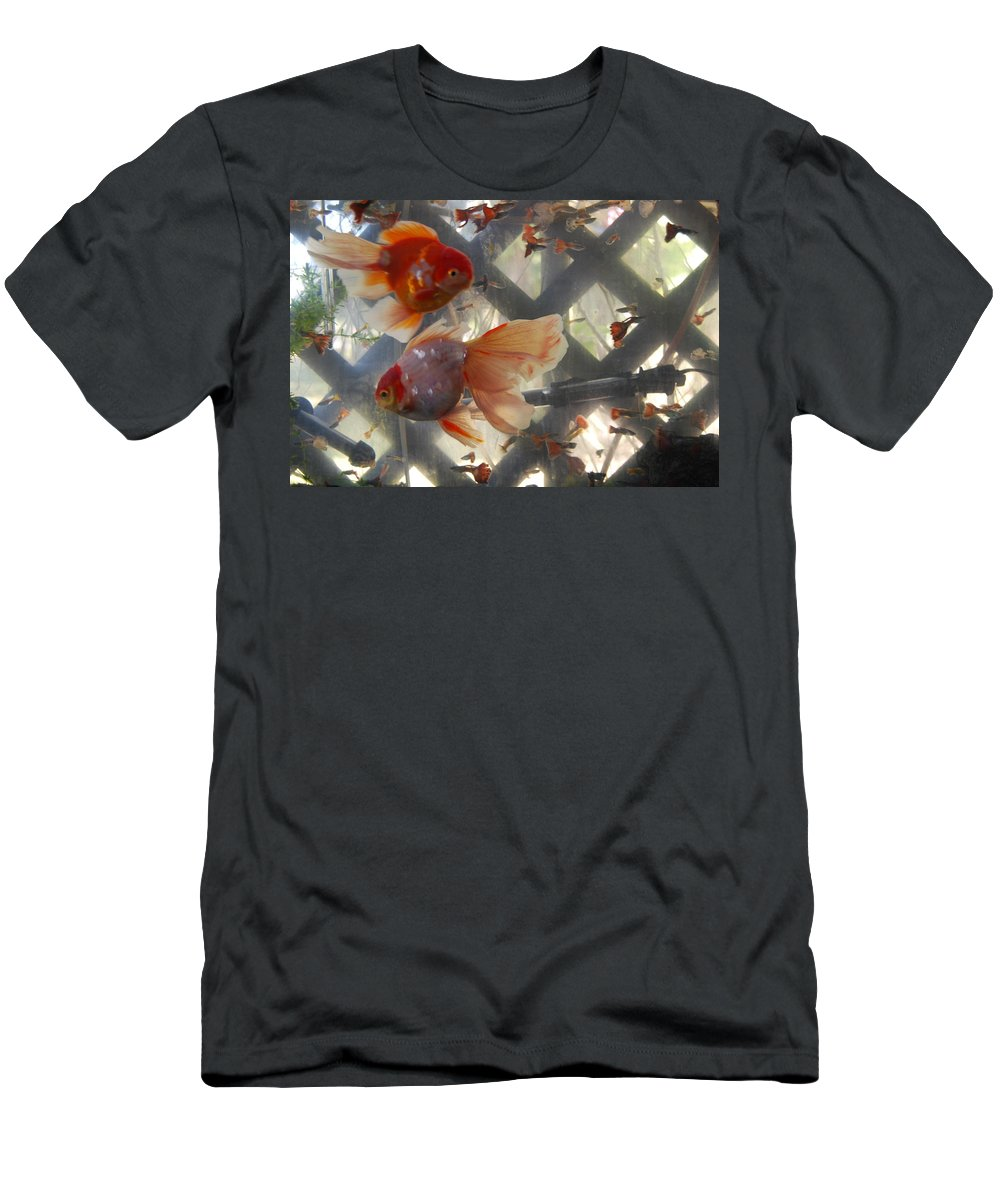 Taken Through Side Of Aquarium Men's T-Shirt (Athletic Fit) featuring the photograph Triple Tail Goldfish by Robert Floyd