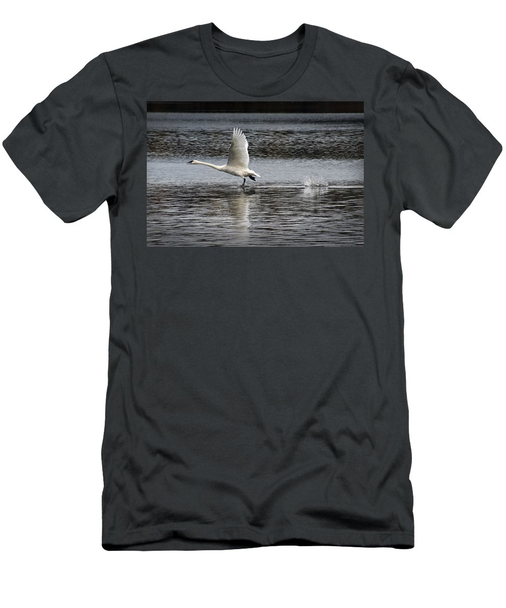 Art Men's T-Shirt (Athletic Fit) featuring the photograph Trumpeter Swan Walking On Water by Randall Nyhof