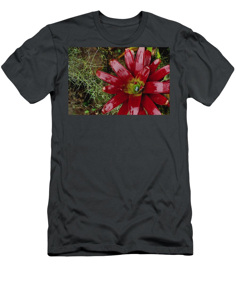 Feb0514 Men's T-Shirt (Athletic Fit) featuring the photograph Tufted Airplant And Spanish Moss by Mark Moffett