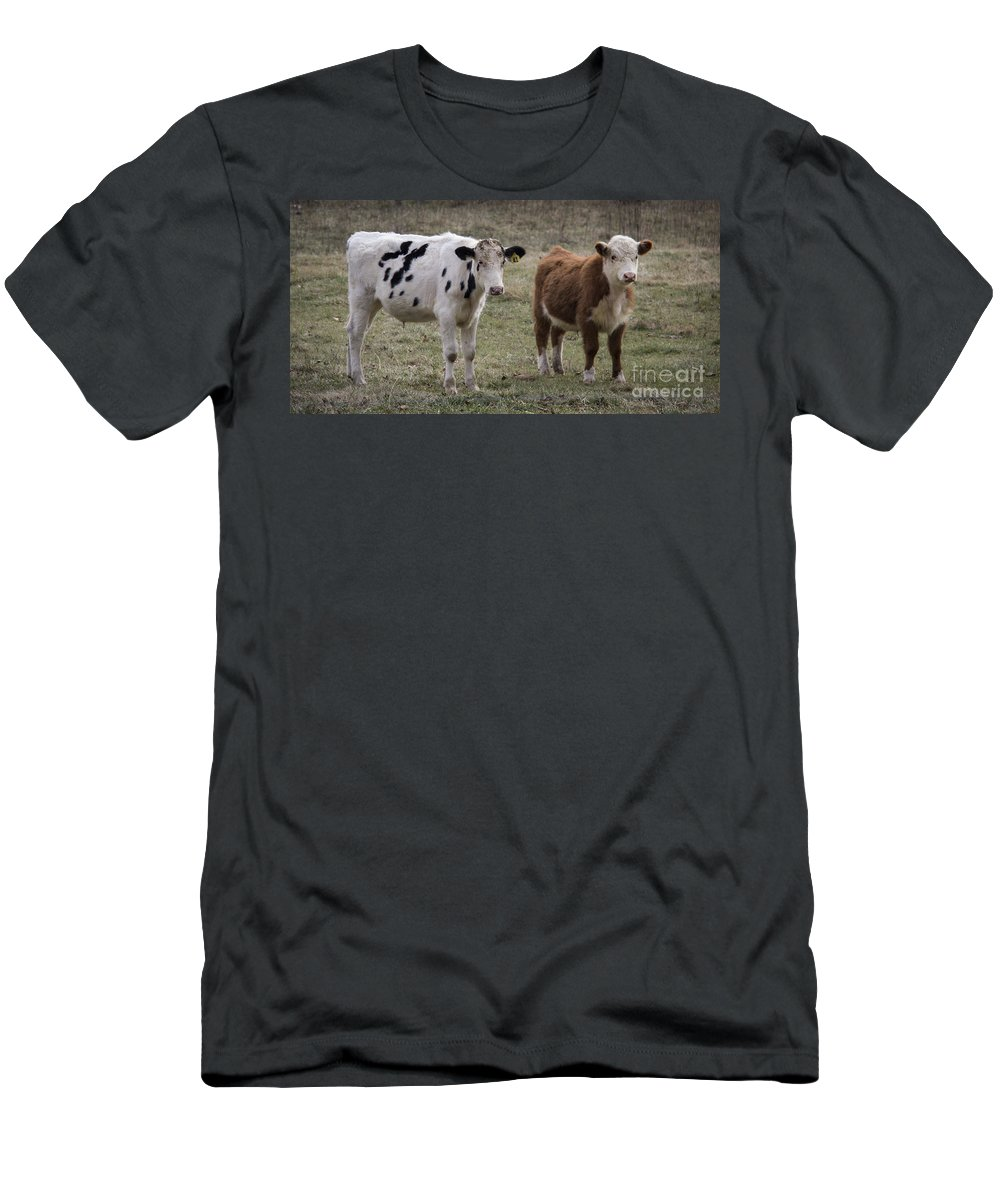 Cow Men's T-Shirt (Athletic Fit) featuring the photograph Uncertain by Teresa Mucha