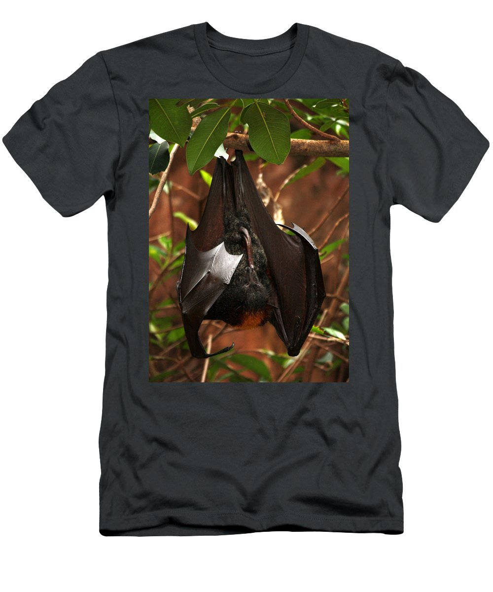 Disney World Men's T-Shirt (Athletic Fit) featuring the photograph Very Fruity Bat by David Nicholls