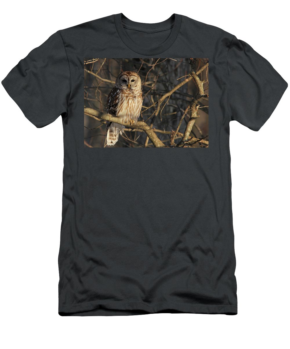 Barred Owl Men's T-Shirt (Athletic Fit) featuring the photograph Waiting For Supper by Lori Deiter