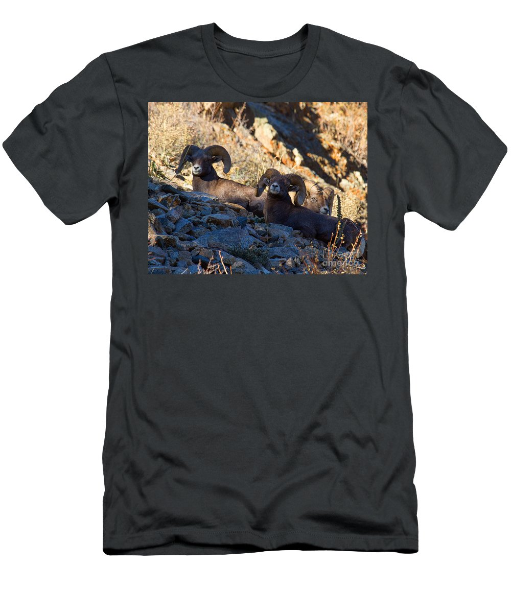 Bighorn Sheep Men's T-Shirt (Athletic Fit) featuring the photograph We Three Kings by Jim Garrison