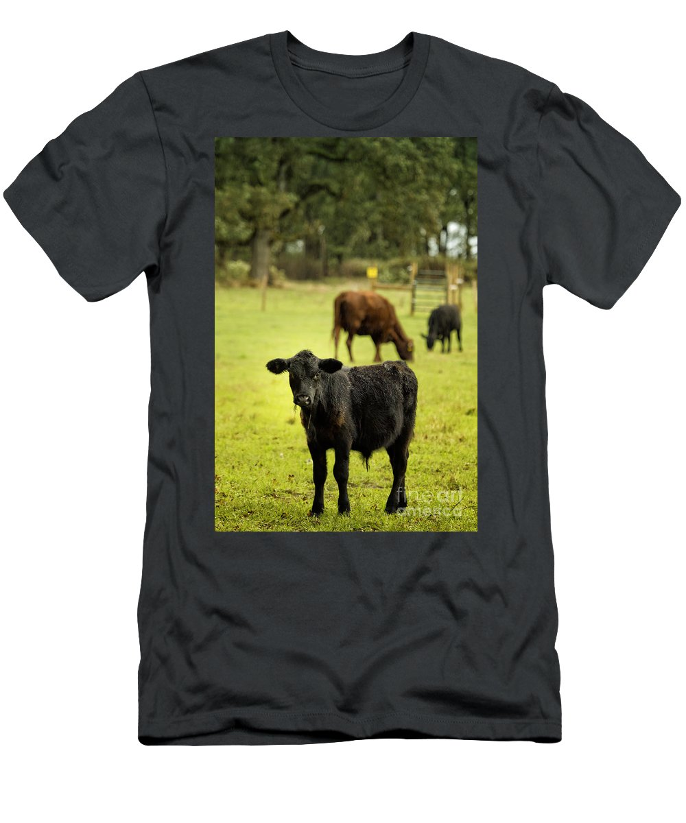 Calf Men's T-Shirt (Athletic Fit) featuring the photograph Wet Calf by Belinda Greb