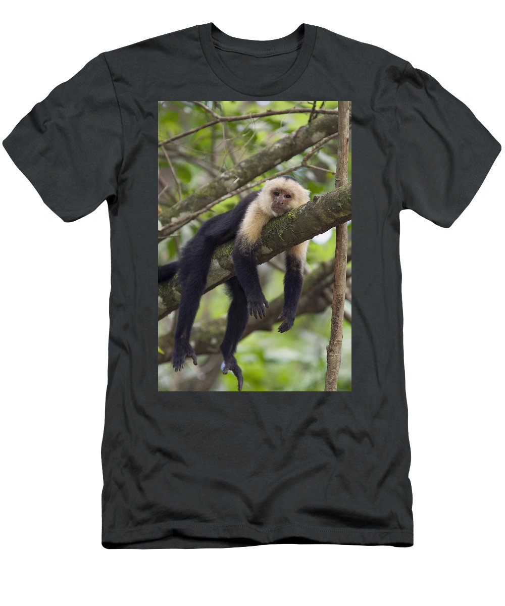 Feb0514 Men's T-Shirt (Athletic Fit) featuring the photograph White-faced Capuchin Costa Rica by Suzi Eszterhas