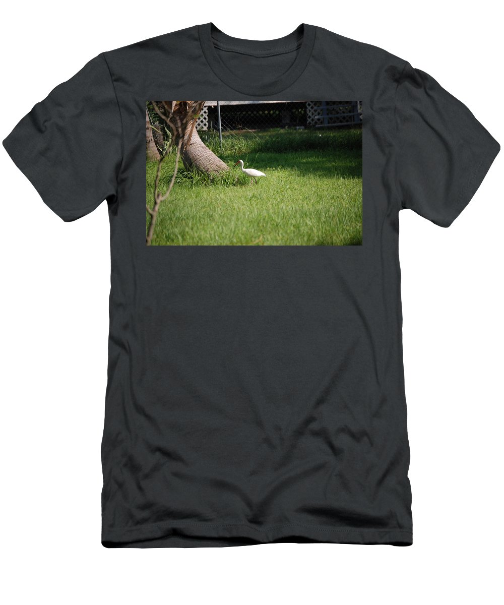 Checking Out My Backyard Men's T-Shirt (Athletic Fit) featuring the photograph White Ibis by Robert Floyd