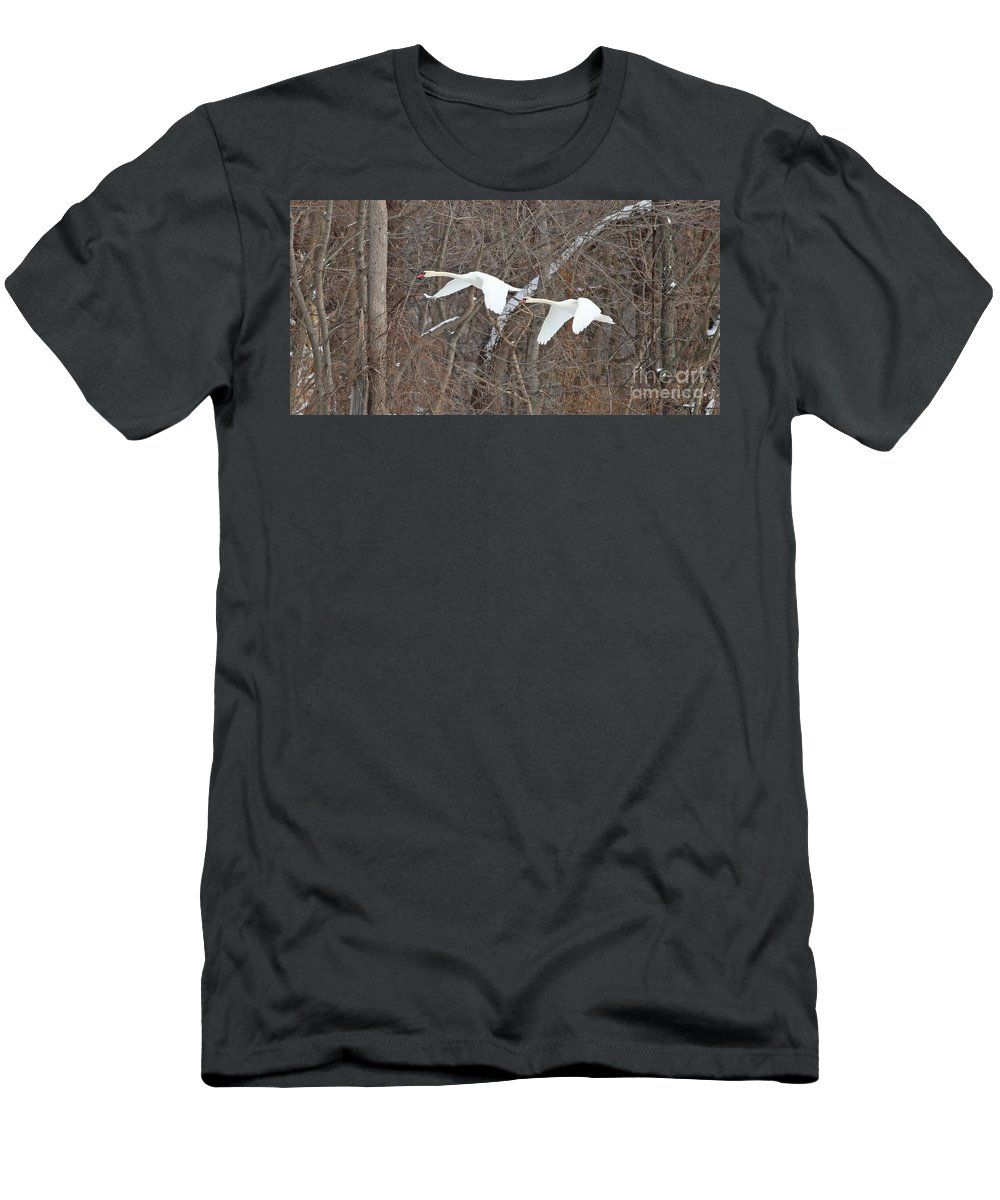 White Swans Men's T-Shirt (Athletic Fit) featuring the photograph White Swans In Flight 1589 by Jack Schultz