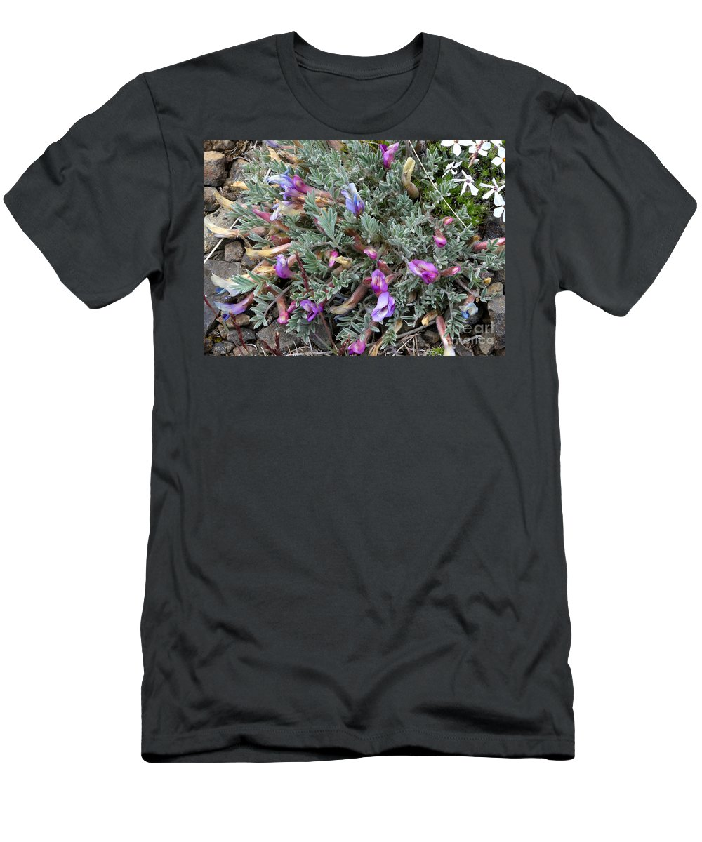 Woolly-pod Locoweed Men's T-Shirt (Athletic Fit) featuring the photograph Wildflowers - Woolly-pod Locoweed by Carol Groenen