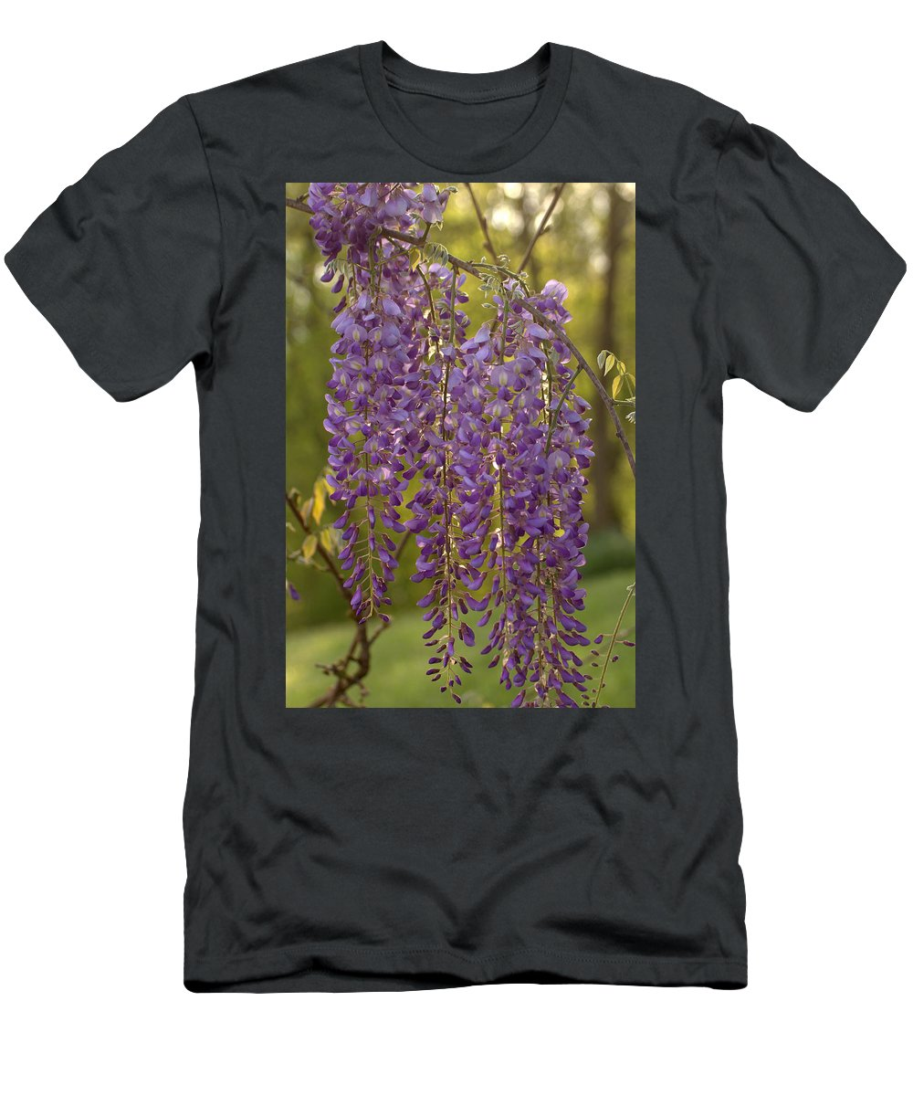 Wisteria Vine Men's T-Shirt (Athletic Fit) featuring the photograph Wisteria Clusters by Mel Hensley