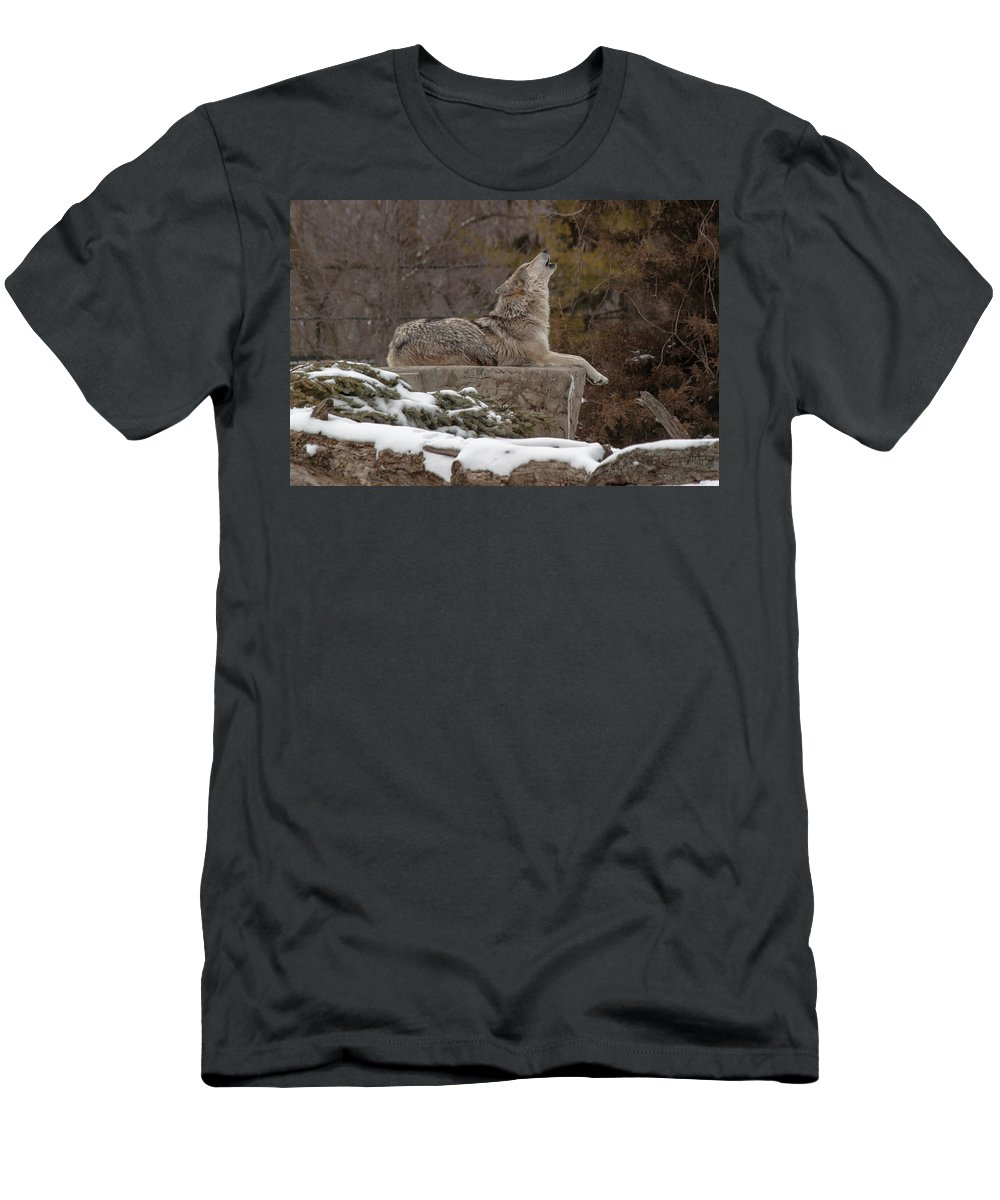 Female Wolves Men's T-Shirt (Athletic Fit) featuring the photograph Wolf Talk by Thomas Sellberg