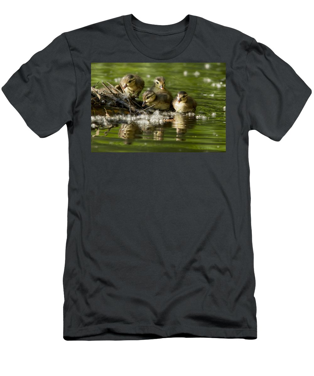 Babies Men's T-Shirt (Athletic Fit) featuring the photograph Wood Duck Babies by Mircea Costina Photography