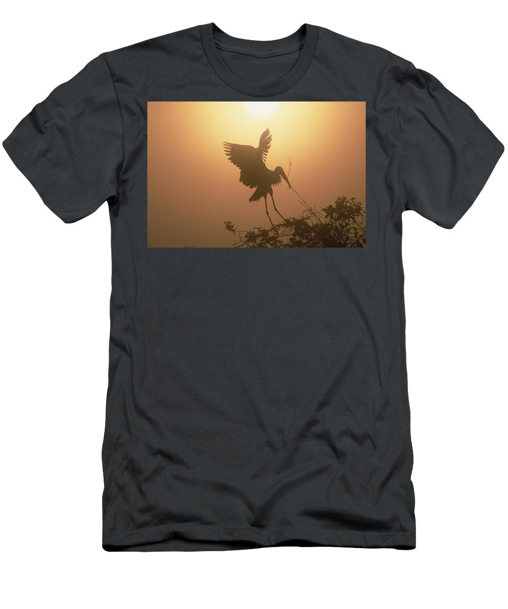 Feb0514 Men's T-Shirt (Athletic Fit) featuring the photograph Wood Stork Collecting Nesting Material by Tim Fitzharris