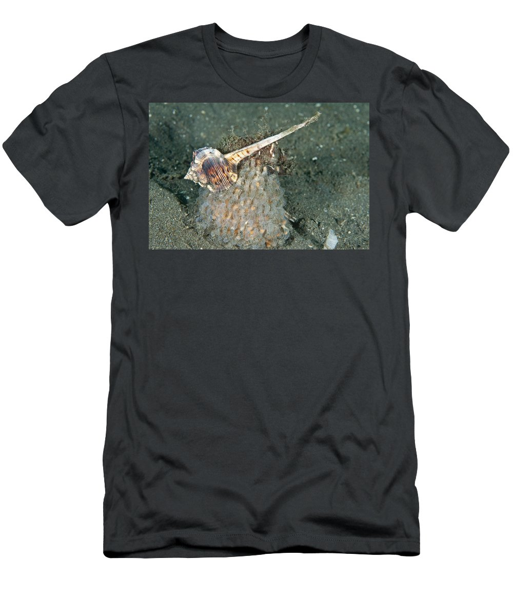 Woodcock Murex Men's T-Shirt (Athletic Fit) featuring the photograph Woodcock Murex Depositing Eggs by Andrew J. Martinez