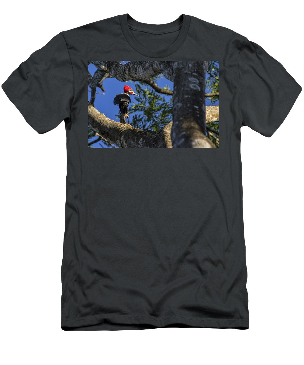 Woodpecker Men's T-Shirt (Athletic Fit) featuring the photograph Woody Woodpecker by David Gleeson