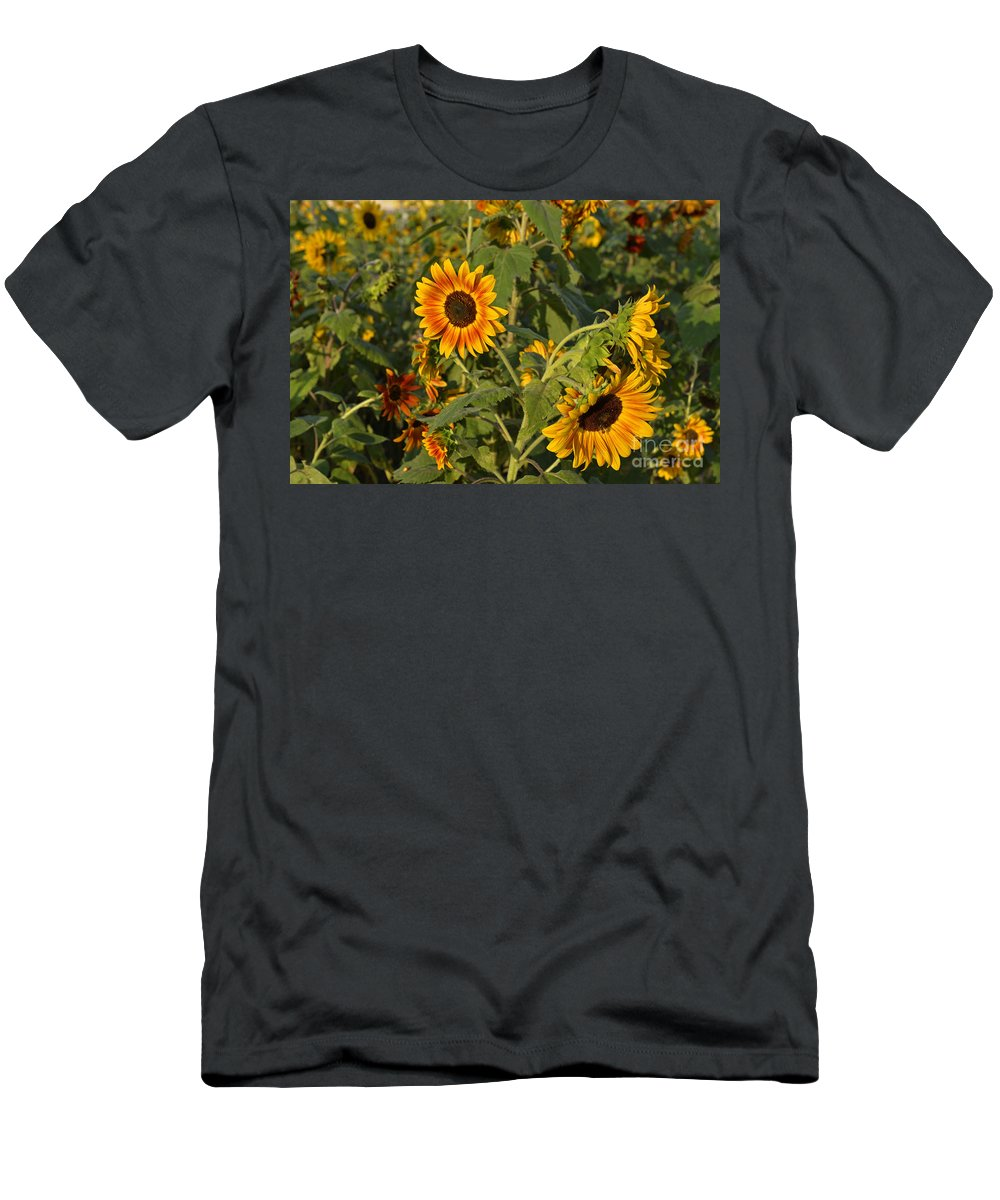 Wildflowers Men's T-Shirt (Athletic Fit) featuring the photograph Yellow And Orange Sunflowers by Roy Thoman