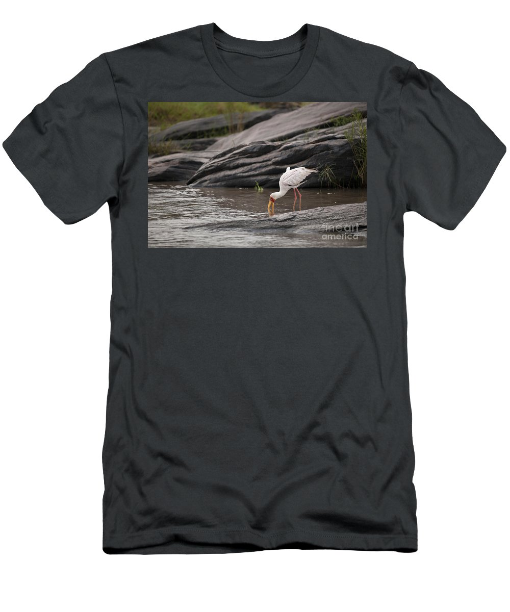 Africa Men's T-Shirt (Athletic Fit) featuring the photograph Yellow-billed Stork Fishing In River by John Shaw