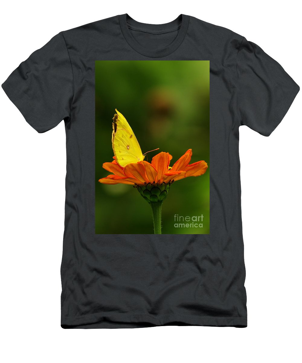 Yellow Cabbage Moth Men's T-Shirt (Athletic Fit) featuring the photograph Yellow Cabbage Moth by Kitrina Arbuckle