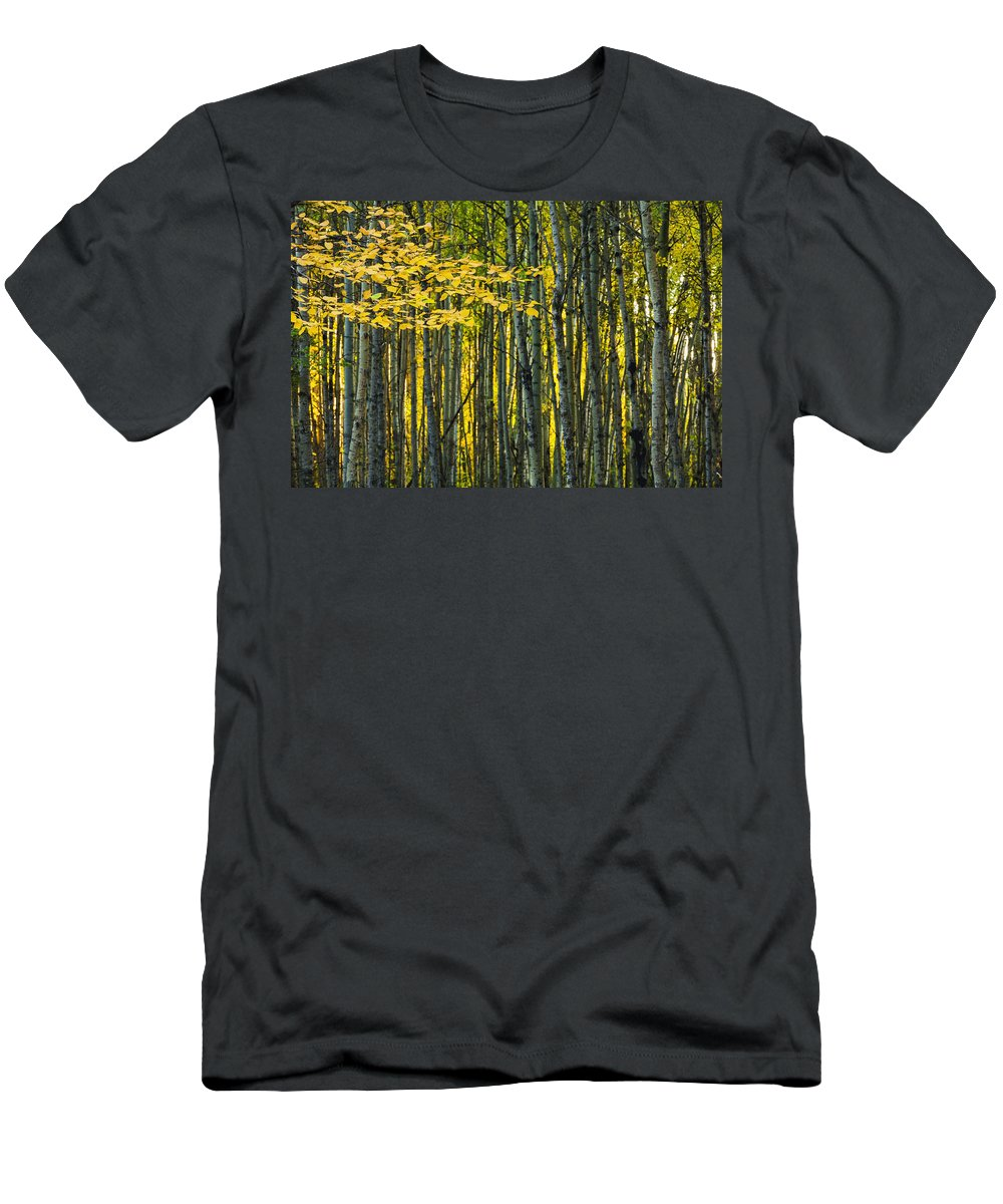 Yellow Men's T-Shirt (Athletic Fit) featuring the photograph Yellow Fall Birch Leaves Against An by Joel Koop