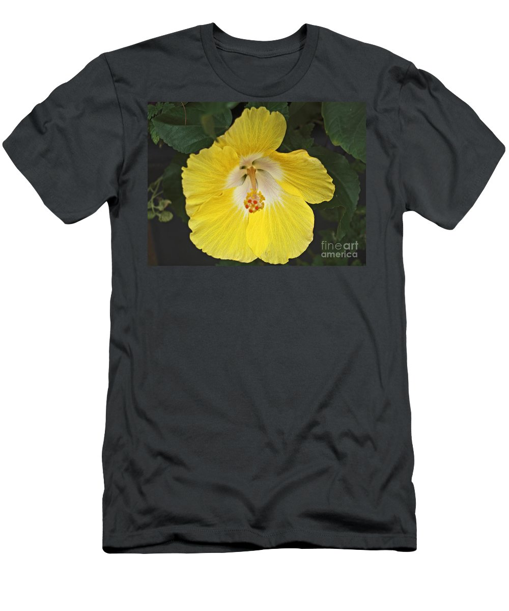 Botanical Men's T-Shirt (Athletic Fit) featuring the photograph Yellow Hibiscus by Howard Stapleton