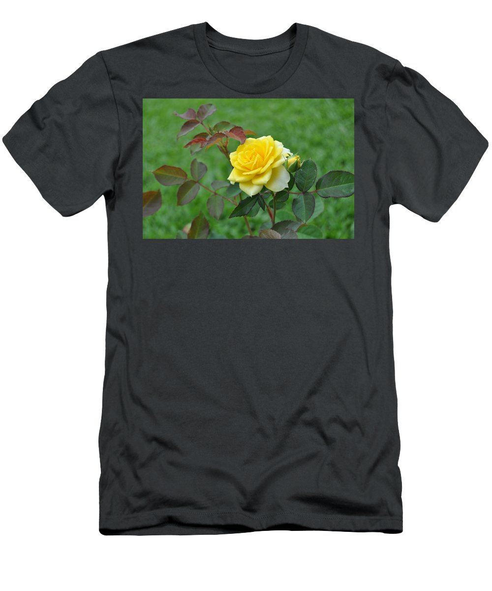 Yellow Roses Men's T-Shirt (Athletic Fit) featuring the photograph Yellow Roses by Cornelia DeDona