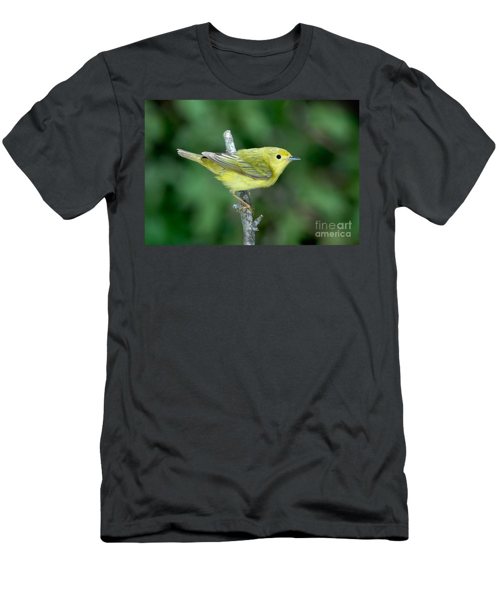 Fauna Men's T-Shirt (Athletic Fit) featuring the photograph Yellow Warbler Dendroica Petechia Female by Anthony Mercieca