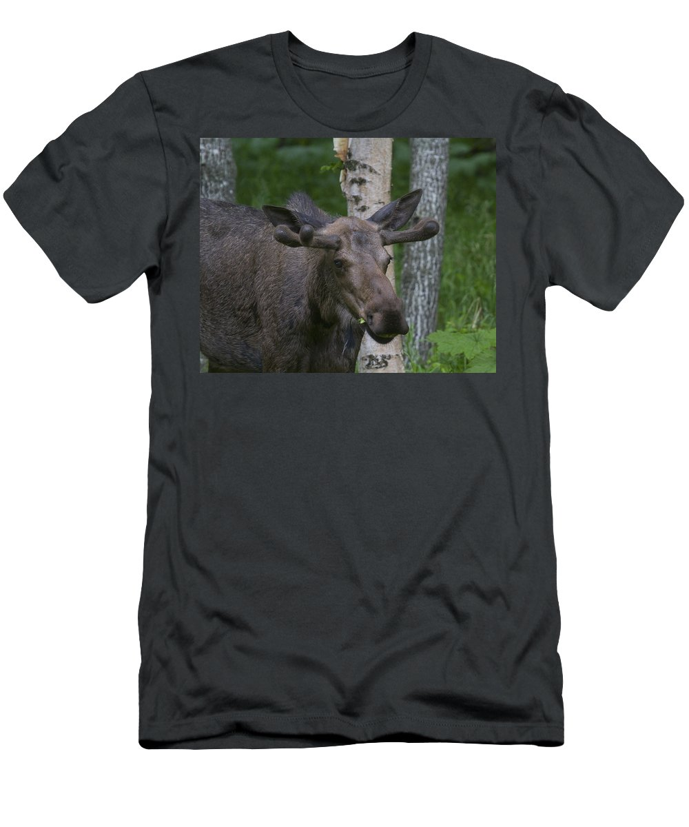 Doug Lloyd Men's T-Shirt (Athletic Fit) featuring the photograph Youngster by Doug Lloyd