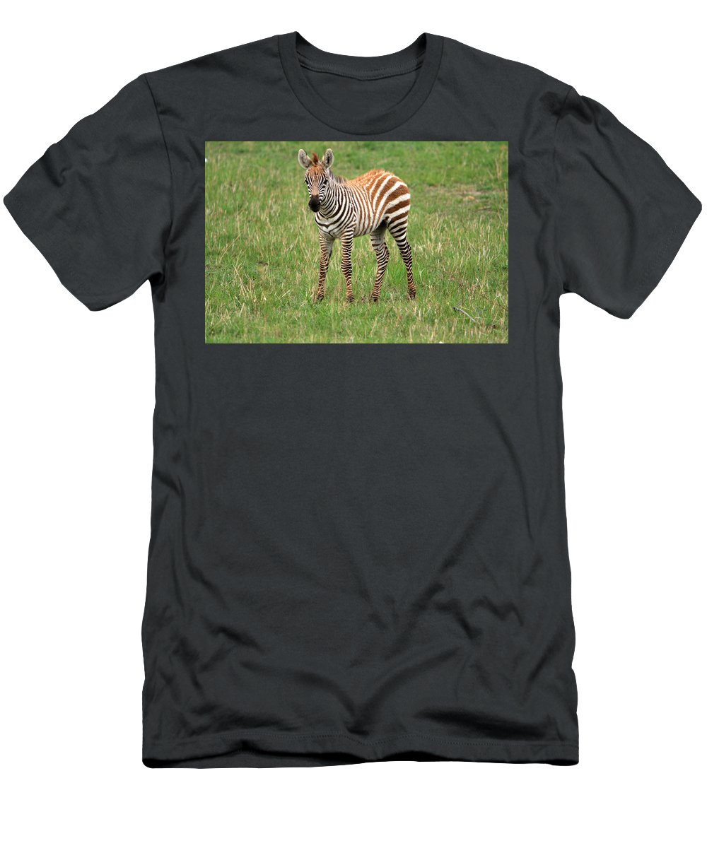 Zebra Men's T-Shirt (Athletic Fit) featuring the photograph Zebra Foal by Aidan Moran