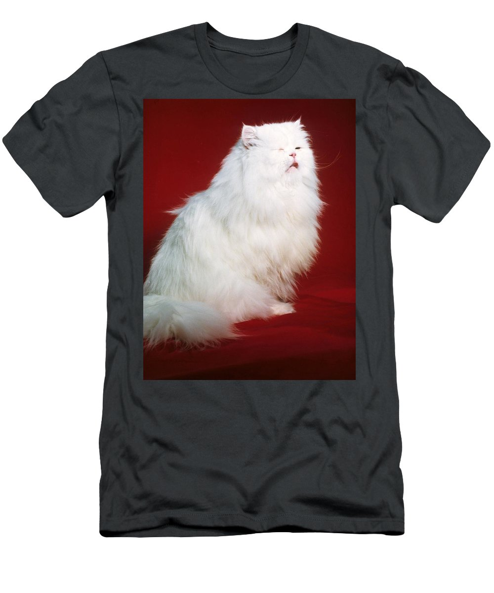 Persian Cat Men's T-Shirt (Athletic Fit) featuring the photograph Persian Cat In Distress by Larry Allan