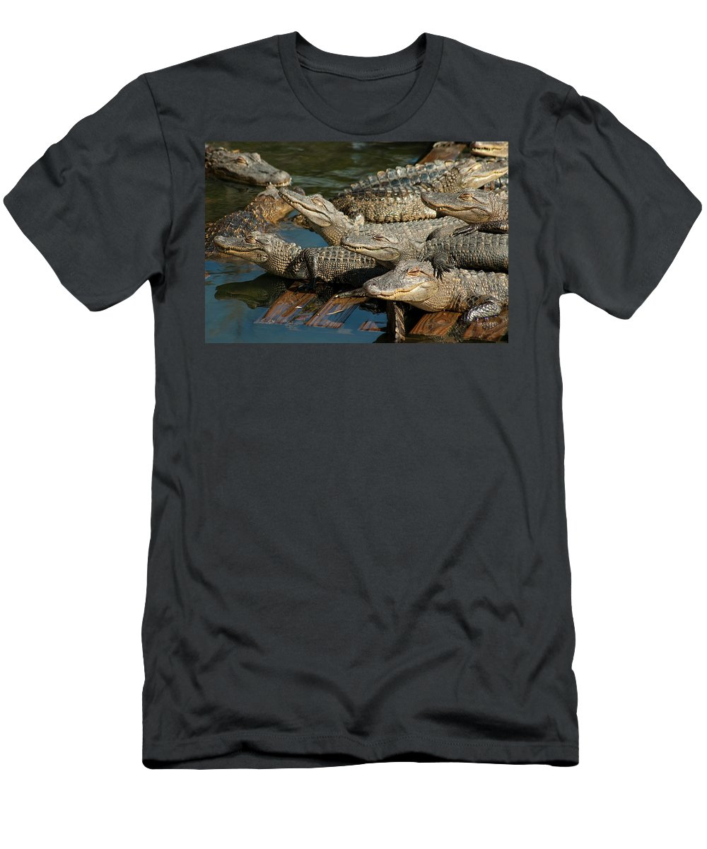 Alligator Men's T-Shirt (Athletic Fit) featuring the photograph Alligator Pool Party by Carolyn Marshall