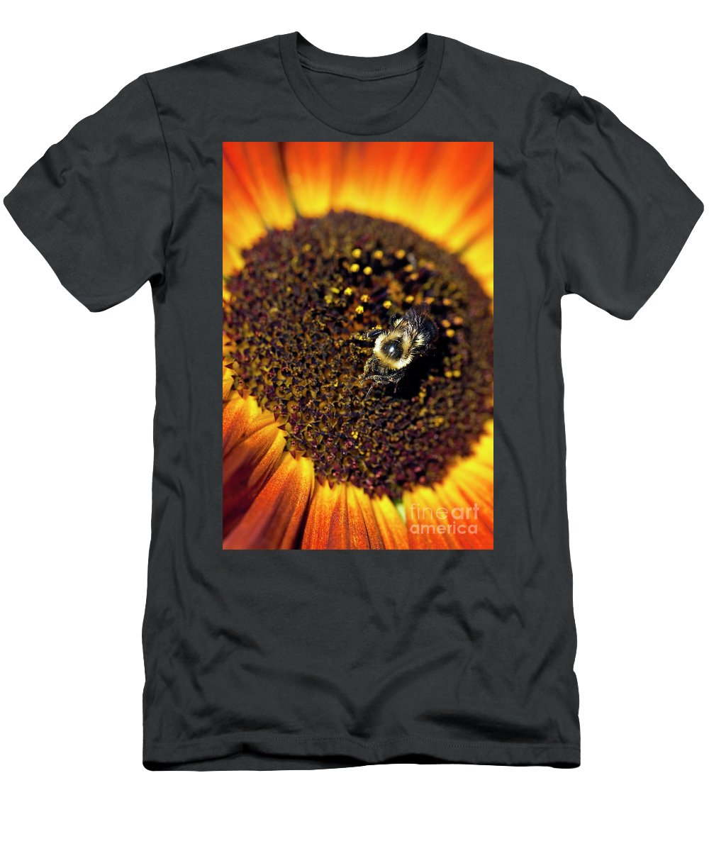Helianthus Annuus Men's T-Shirt (Athletic Fit) featuring the photograph Bee And Sunflower by John Greim
