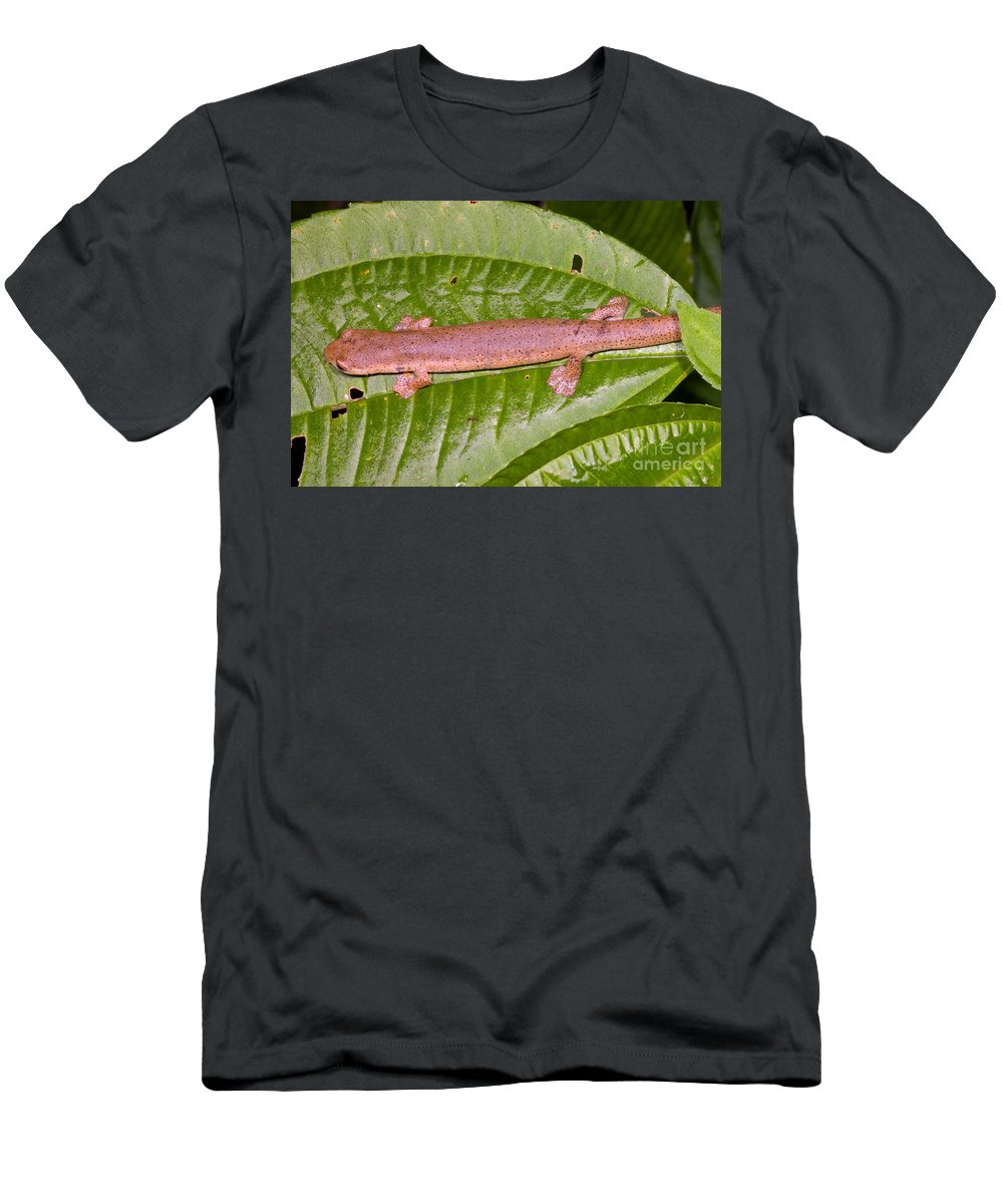 Bolitoglossine Men's T-Shirt (Athletic Fit) featuring the photograph Bolitoglossine Salamander by Dante Fenolio