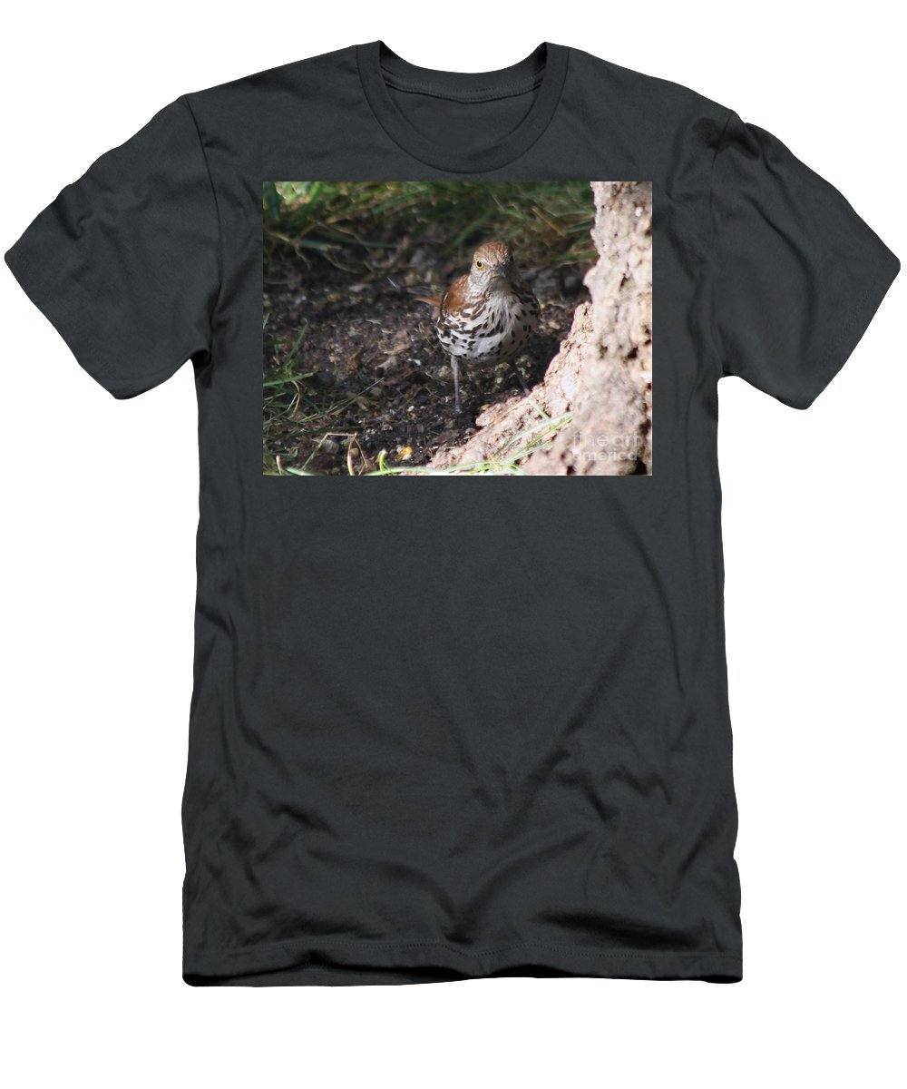 Bird Men's T-Shirt (Athletic Fit) featuring the photograph Brown Thrasher by Lori Tordsen