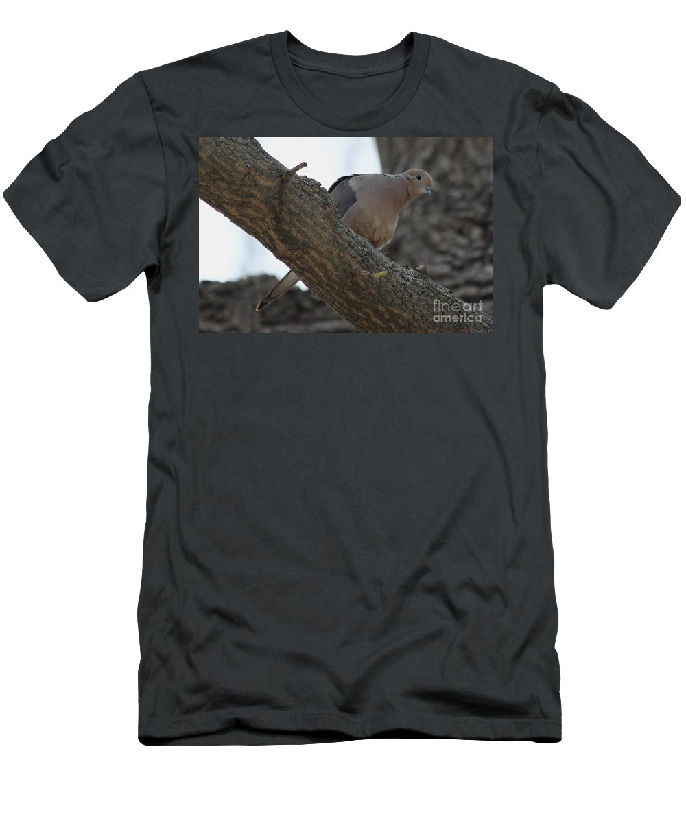 Dove Men's T-Shirt (Athletic Fit) featuring the photograph Dove by Lori Tordsen