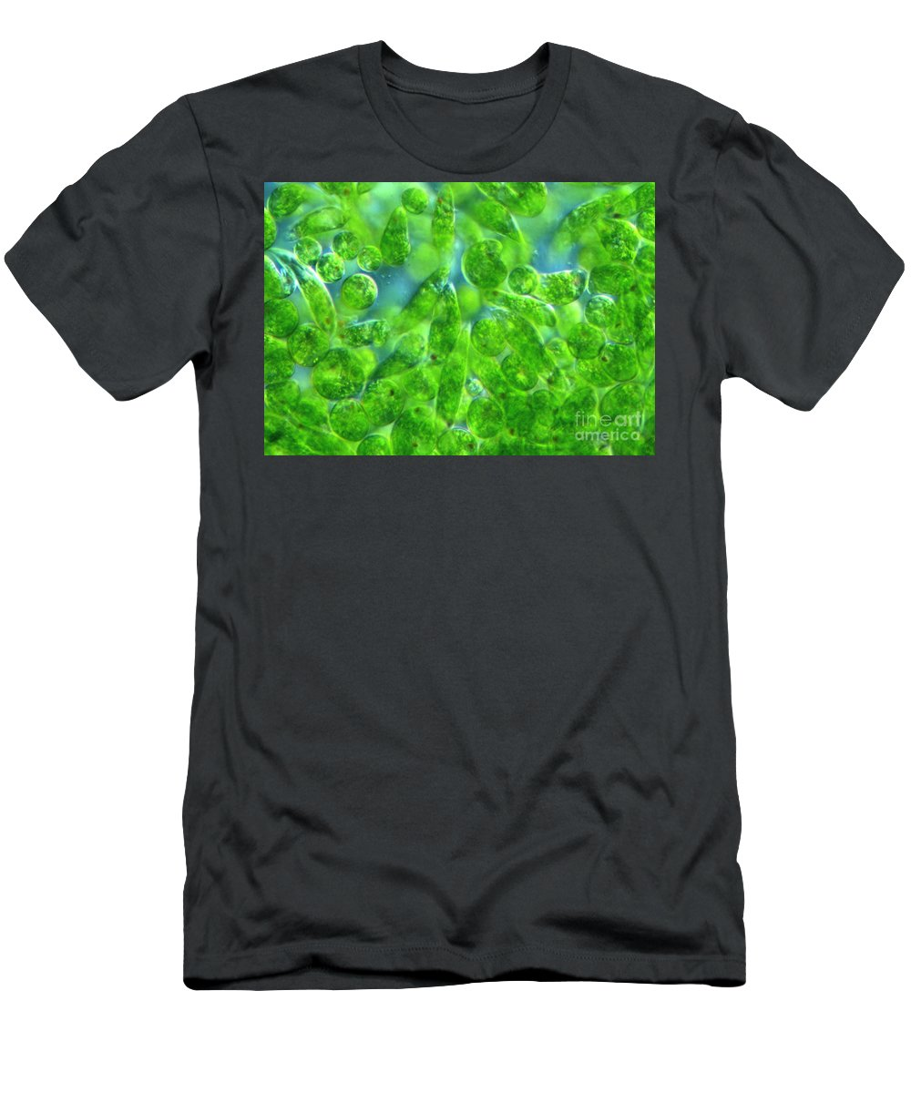 Light Microscopy Men's T-Shirt (Athletic Fit) featuring the photograph Euglena by M. I. Walker