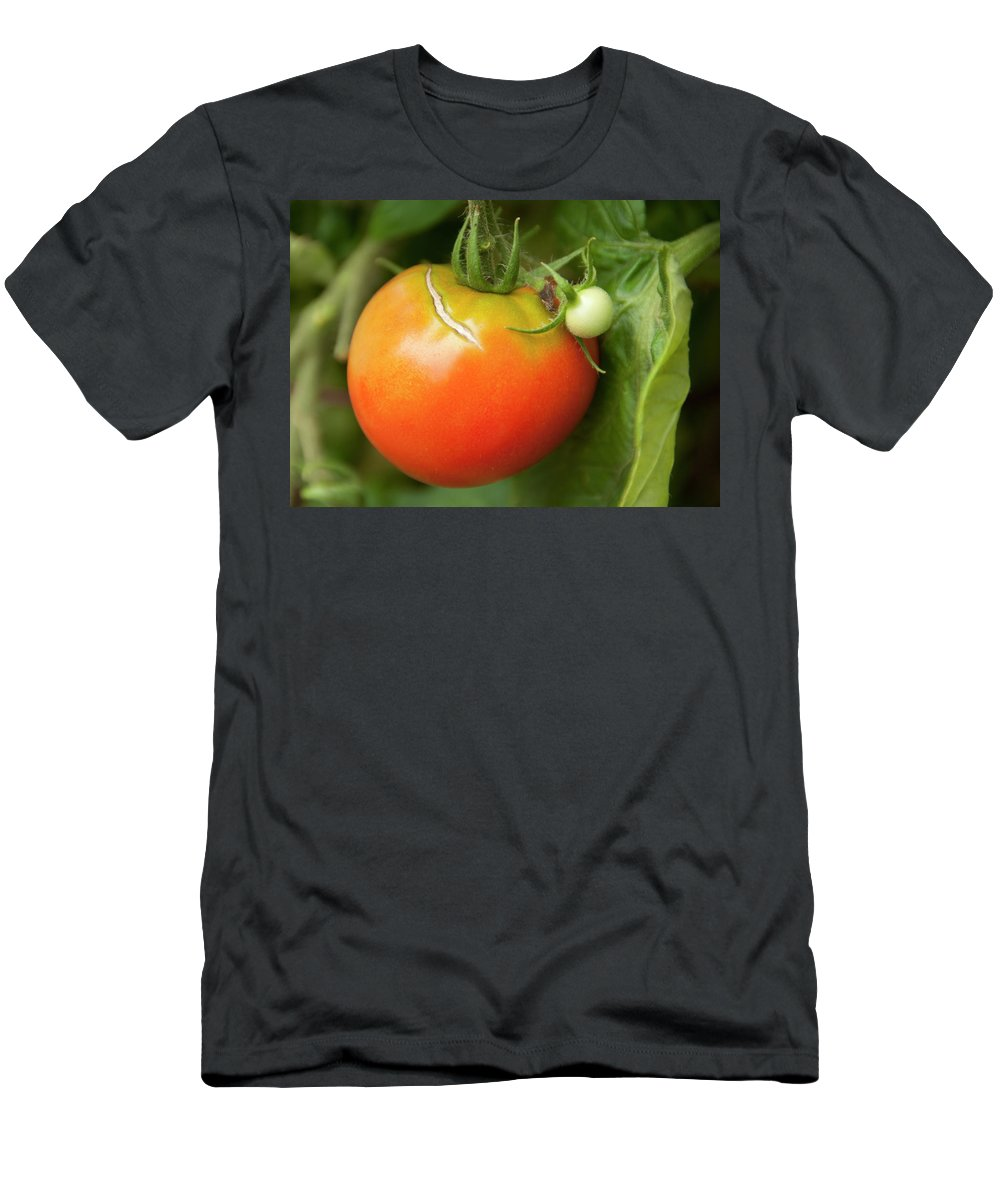 Photography Men's T-Shirt (Athletic Fit) featuring the photograph Tomato by Steven Natanson