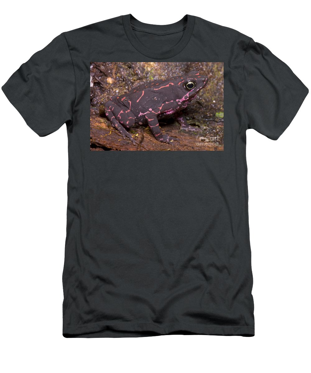 Atelopus Men's T-Shirt (Athletic Fit) featuring the photograph Harlequin Frog by Dante Fenolio