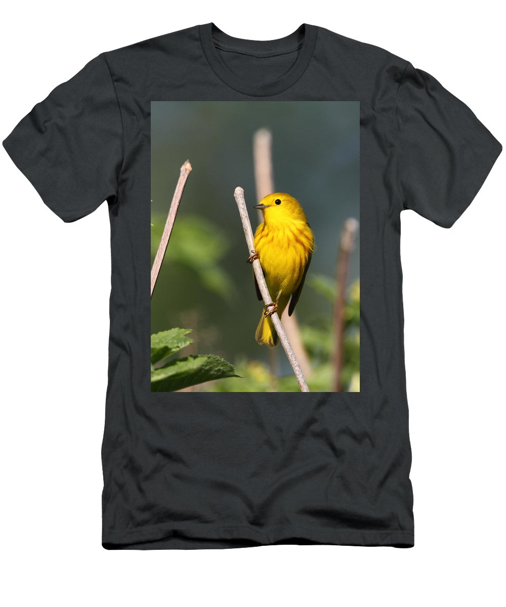 Doug Lloyd Men's T-Shirt (Athletic Fit) featuring the photograph Yellow Warbler by Doug Lloyd