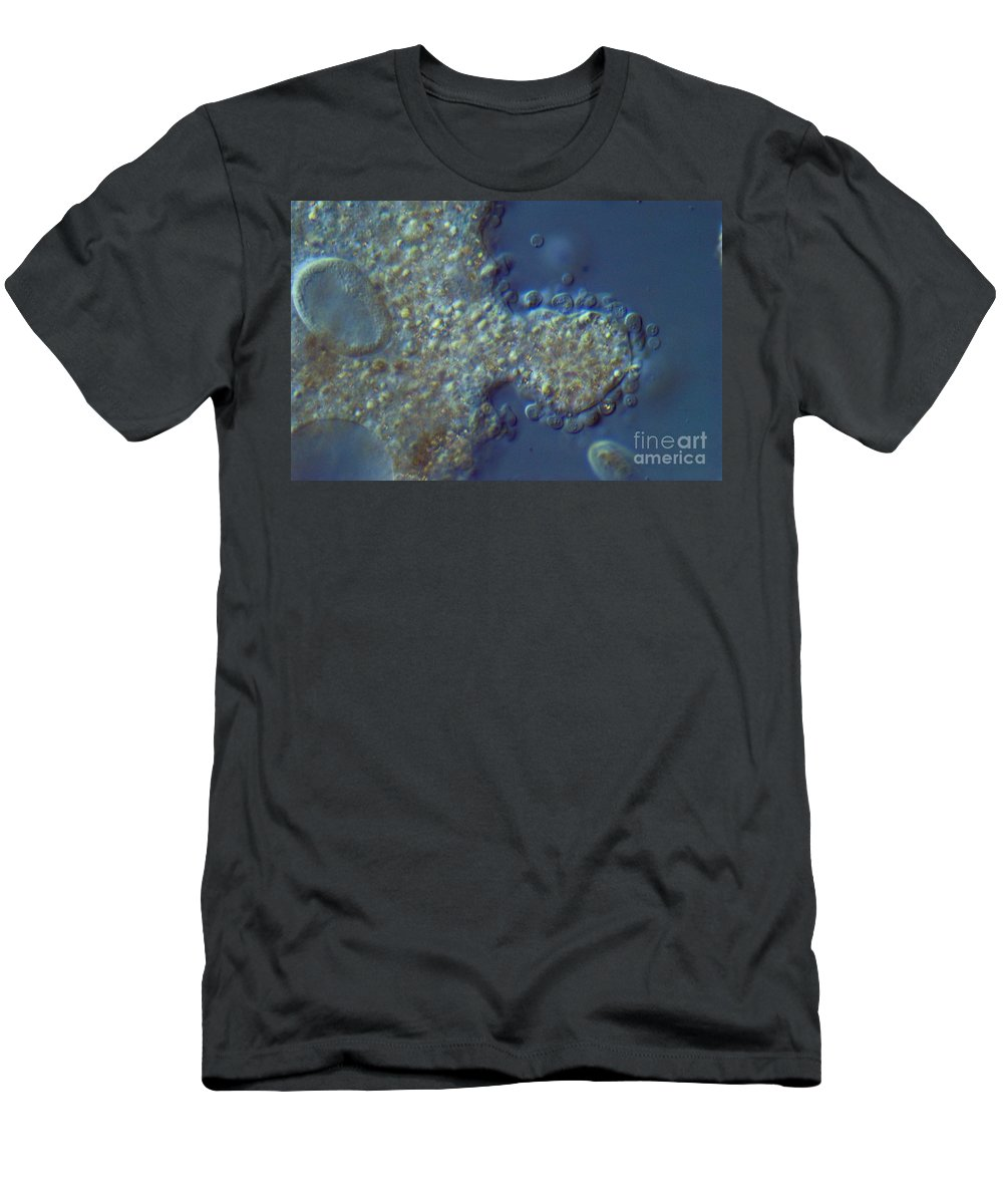 Science Men's T-Shirt (Athletic Fit) featuring the photograph Amoeba Proteus Lm by M. I. Walker