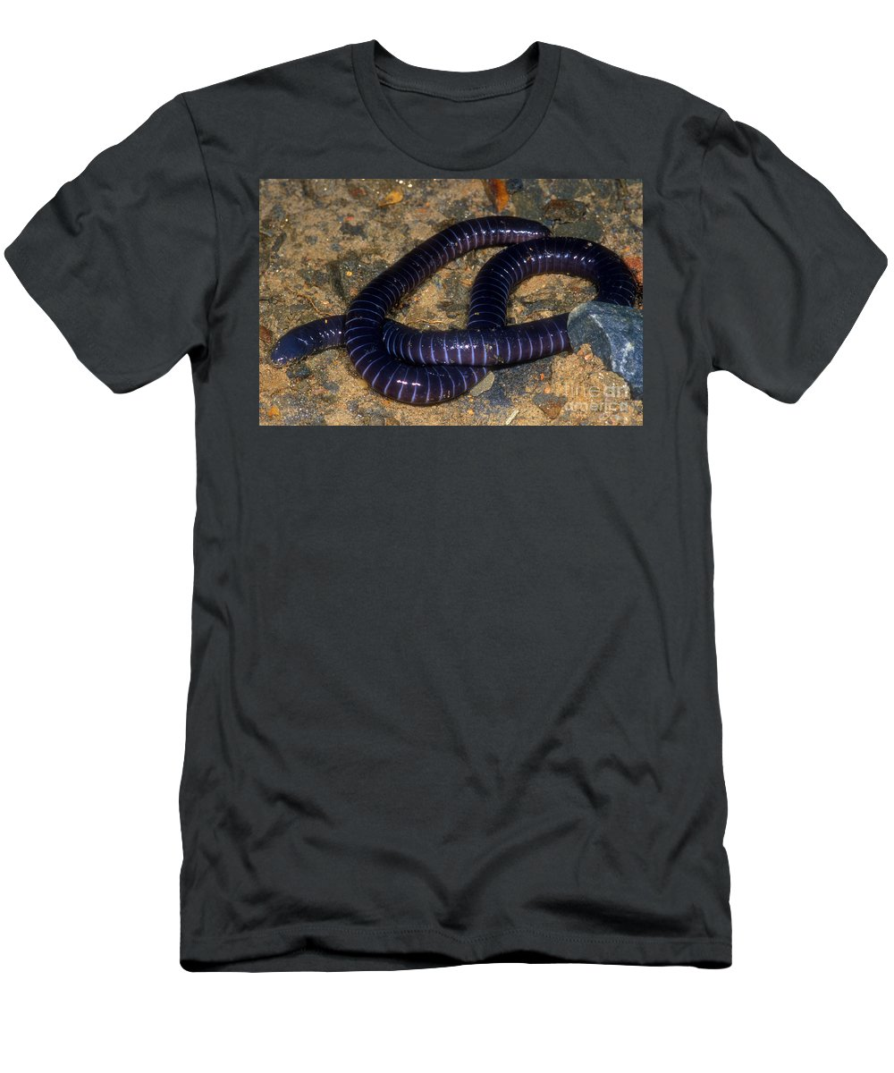 Boettgers Caecilian Men's T-Shirt (Athletic Fit) featuring the photograph Boettgers Caecilian by Dante Fenolio
