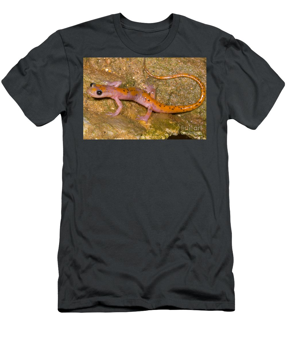 Eurycea Lucifuga Men's T-Shirt (Athletic Fit) featuring the photograph Cave Salamander by Dante Fenolio