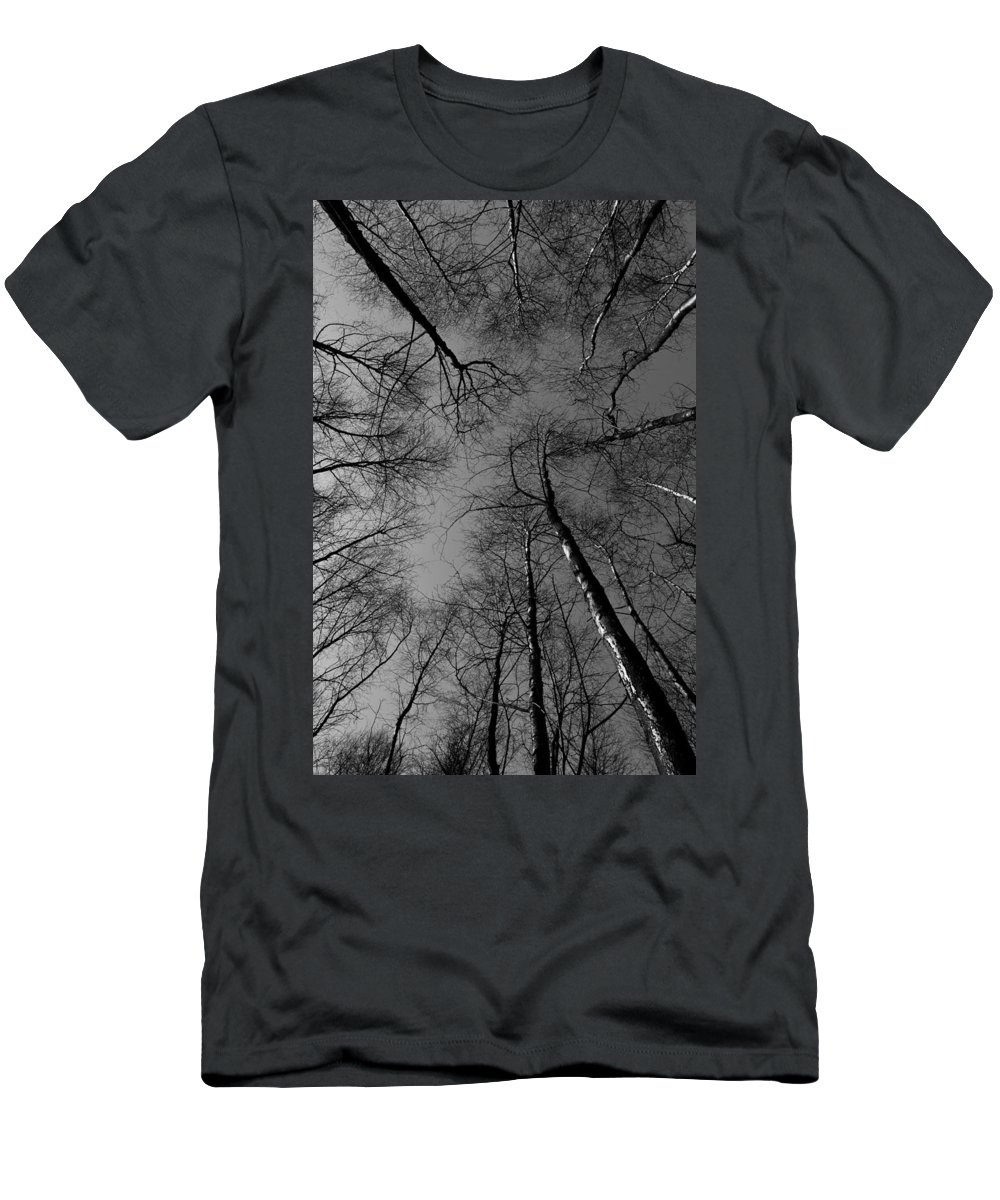 Epping Men's T-Shirt (Athletic Fit) featuring the photograph Epping Forest Trees by David Pyatt