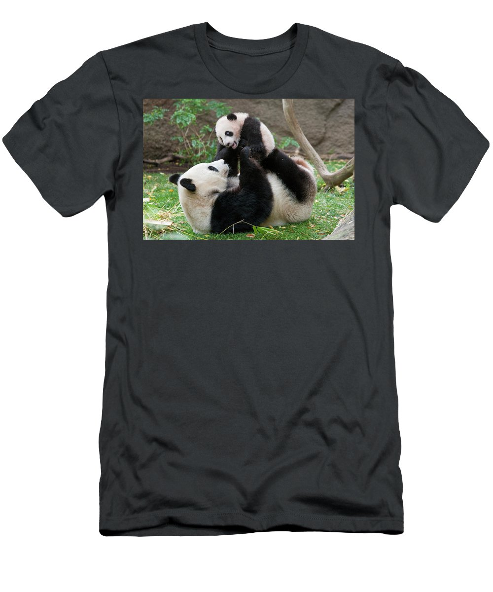 Ailuropoda Melanoleuca Men's T-Shirt (Athletic Fit) featuring the photograph Giant Panda Ailuropoda Melanoleuca by San Diego Zoo
