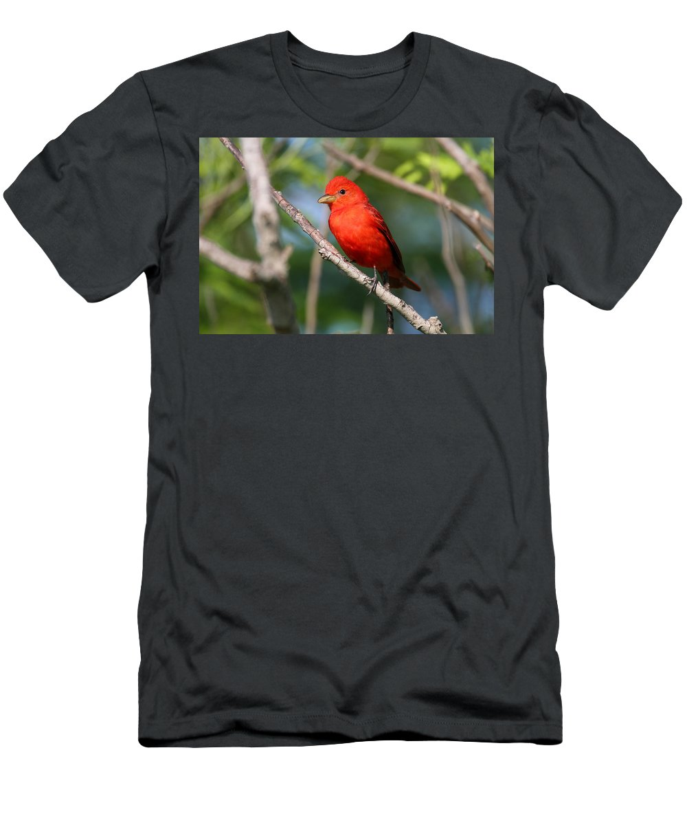 Doug Lloyd Men's T-Shirt (Athletic Fit) featuring the photograph Summer Tanager by Doug Lloyd
