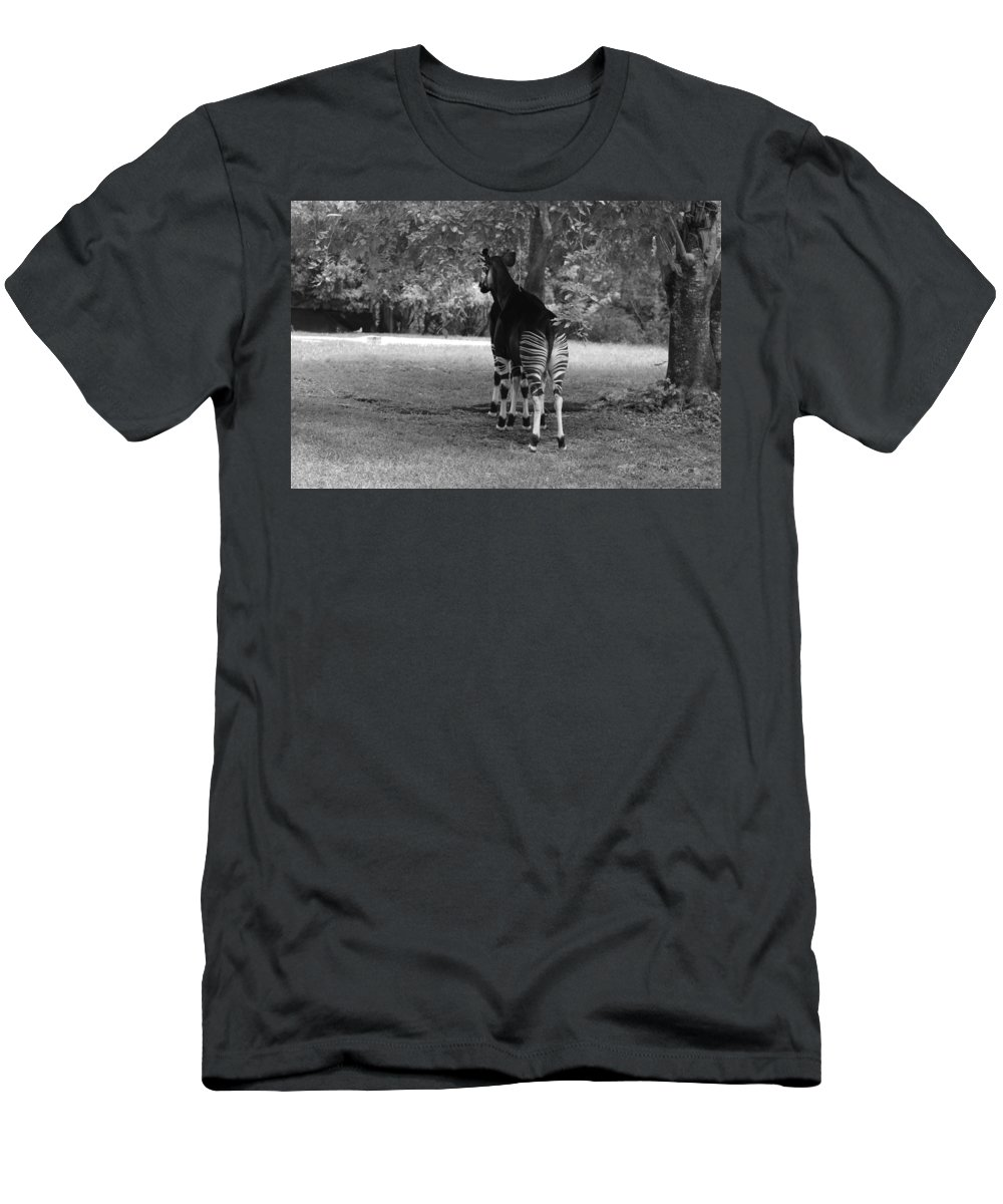 Animal Men's T-Shirt (Athletic Fit) featuring the photograph Two Stripes In Black And White by Rob Hans