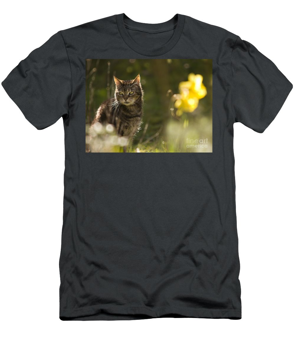 Cat Men's T-Shirt (Athletic Fit) featuring the photograph Wonky Eyed Tiger by Angel Ciesniarska