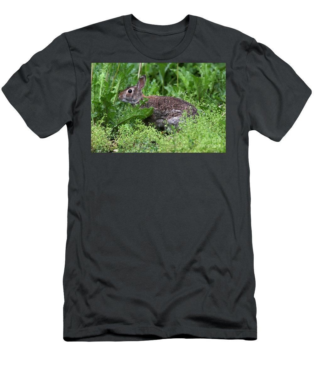 Wildlife Men's T-Shirt (Athletic Fit) featuring the photograph Rabbit by Lori Tordsen