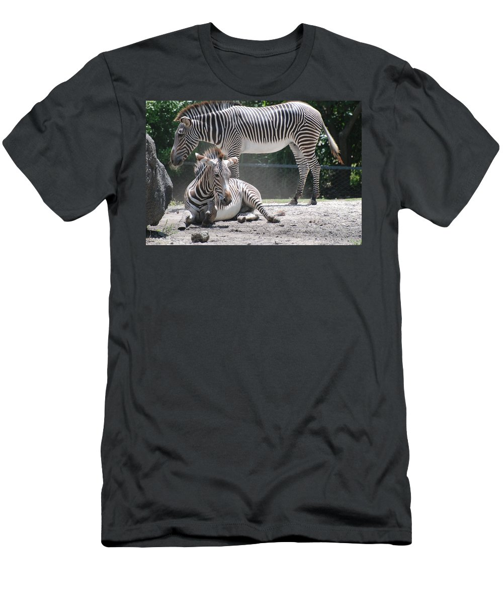 Animal Men's T-Shirt (Athletic Fit) featuring the photograph Zebras by Rob Hans