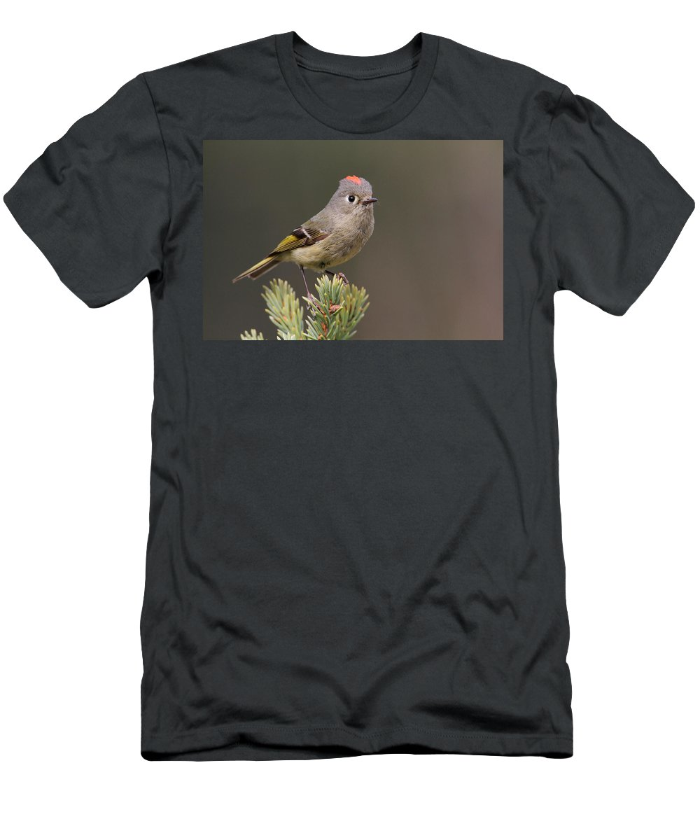 Doug Lloyd Men's T-Shirt (Athletic Fit) featuring the photograph Rubycrowned Kinglet by Doug Lloyd