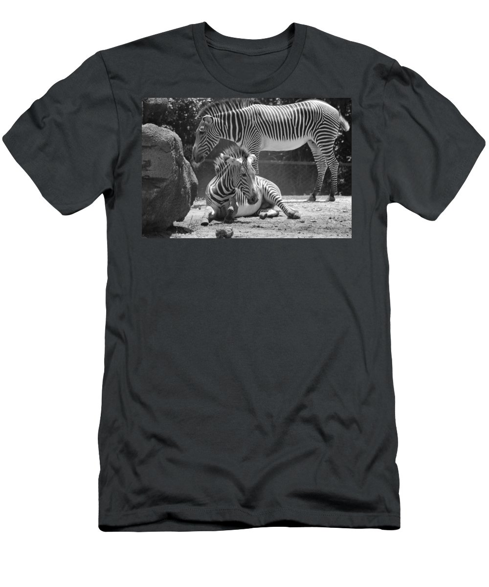 Animal Men's T-Shirt (Athletic Fit) featuring the photograph Zebras In Black And White by Rob Hans