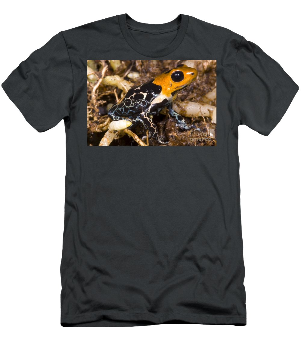 Crowned Poison Frog Men's T-Shirt (Athletic Fit) featuring the photograph Crowned Poison Frog by Dante Fenolio